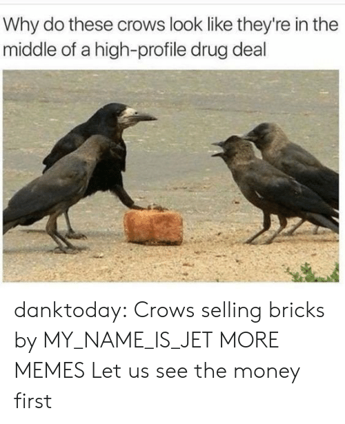 drug deal: Why do these crows look like they're in the  middle of a high-profile drug deal danktoday:  Crows selling bricks by MY_NAME_IS_JET MORE MEMES  Let us see the money first