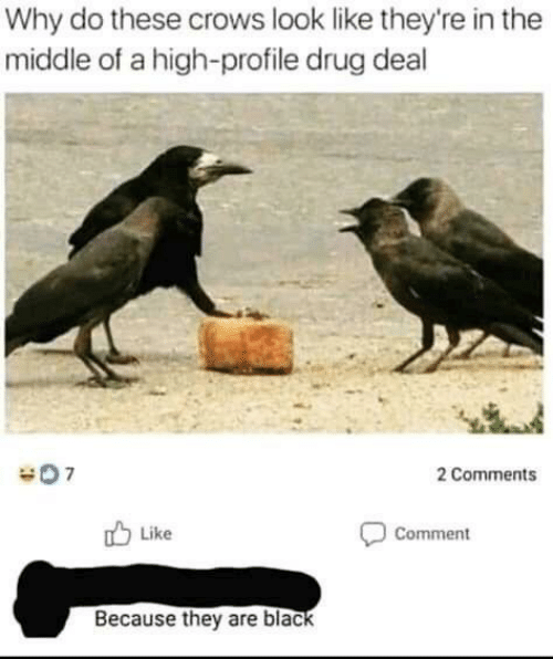 drug deal: Why do these crows look like they're in the  middle of a high-profile drug deal  2 Comments  Like  Comment  Because they are black