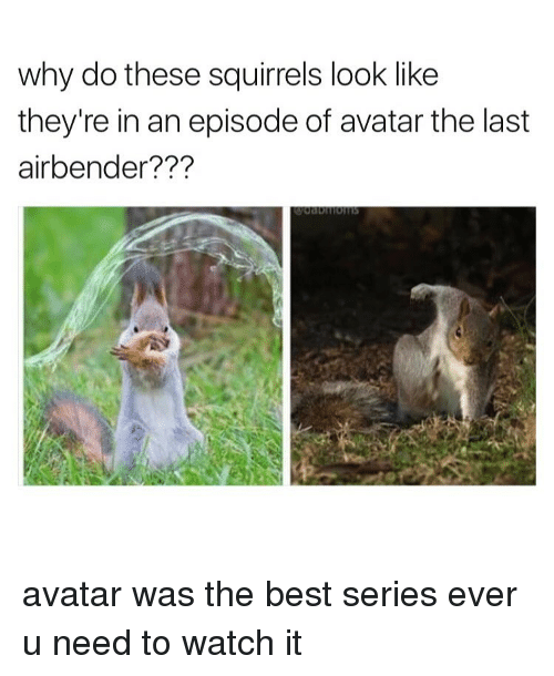 Avatars, Look, and The Best: why do these squirrels look like  they're in an episode of avatar the last  airbender? avatar was the best series ever u need to watch it