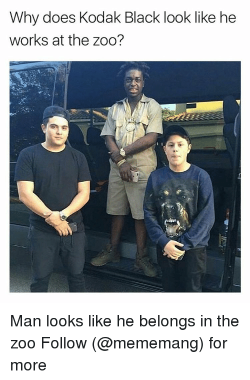 Why Doe: Why does Kodak Black look like he  works at the zoo? Man looks like he belongs in the zoo Follow (@mememang) for more