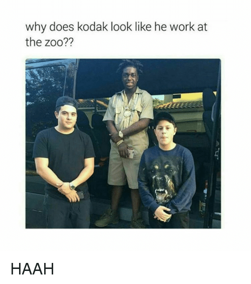 Why Doe: why does kodak look like he work at  the zoo?? HAAH