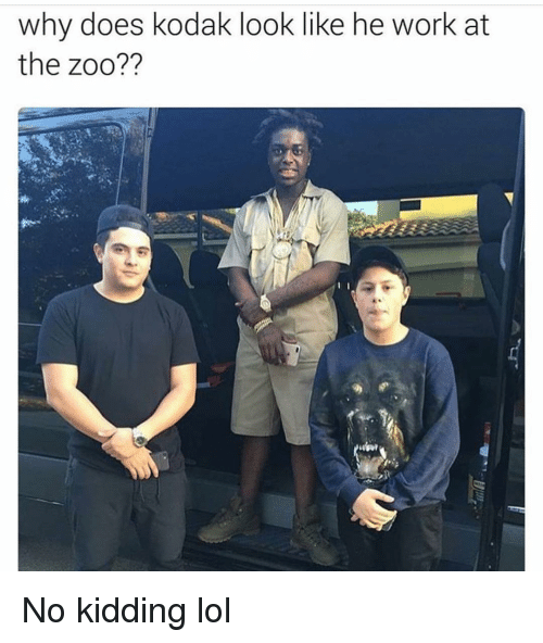 Why Doe: why does kodak look like he work at  the zoo?? No kidding lol