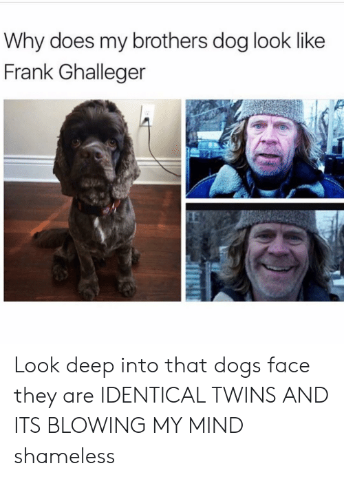 identical twins: Why does my brothers dog look like  Frank Ghalleger Look deep into that dogs face they are IDENTICAL TWINS AND ITS BLOWING MY MIND shameless
