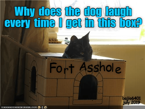 Fort: Why does the dog laugh  every time I get in this box?  Fort Asshole  bajio6401  july 2019  ICANHASCHEE2EBURGER CoM