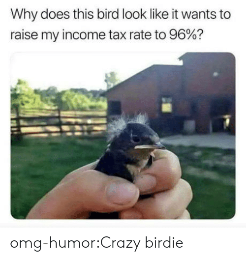birdie: Why does this bird look like it wants to  raise my income tax rate to 96%? omg-humor:Crazy birdie