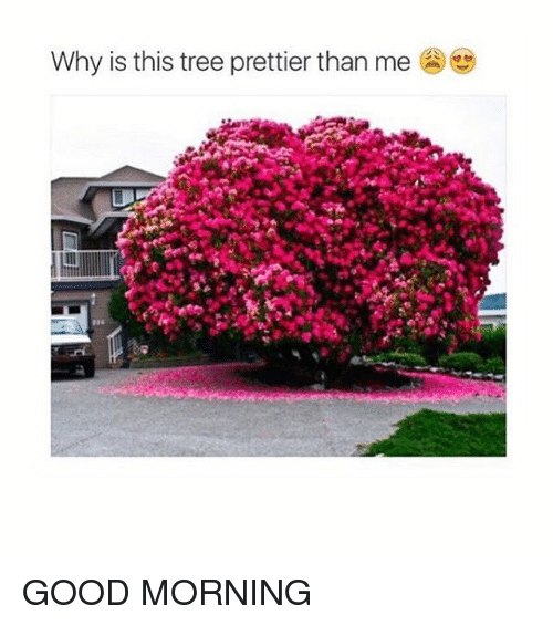 Girl Memes: Why is this tree prettier than me GOOD MORNING