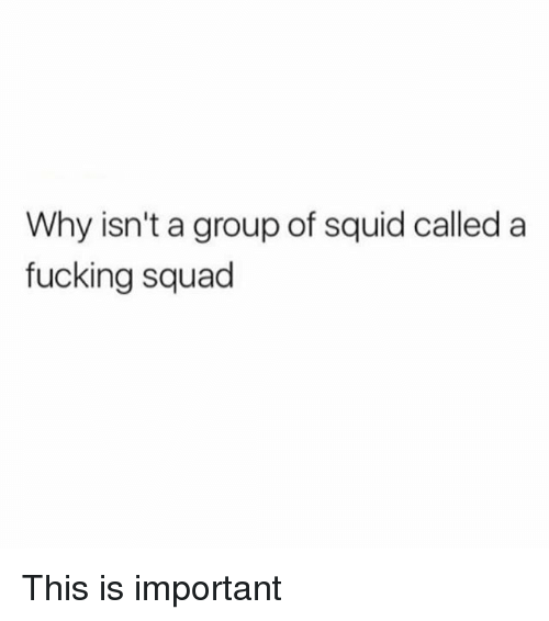 Fucking, Memes, and Squad: Why isn't a group of squid called a  fucking squad This is important