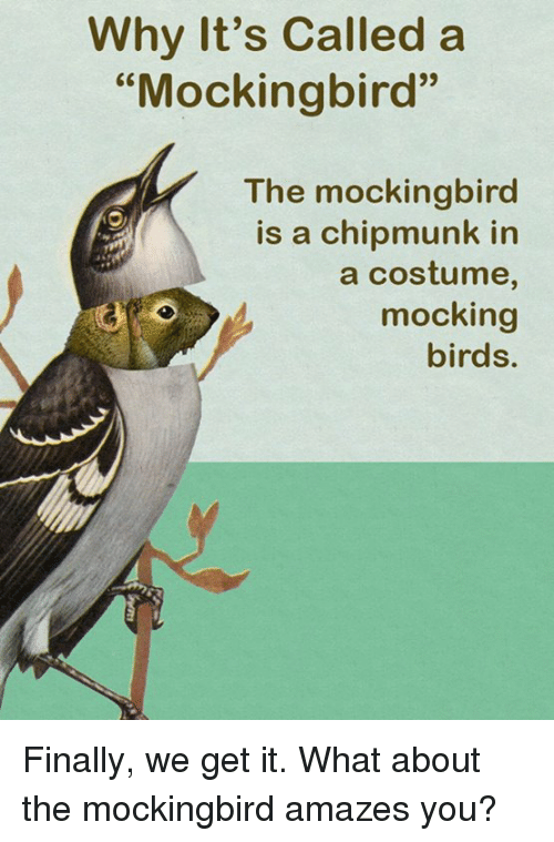 """chipmunk: Why It's Called a  """"Mockingbird""""  The mockingbird  is a chipmunk in  a costume,  mocking  birds. Finally, we get it.  What about the mockingbird amazes you?"""