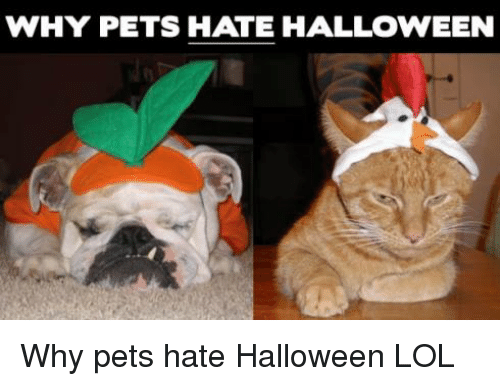Halloween, Memes, and Pets: WHY PETS HATE HALLOWEEN Why pets hate Halloween              LOL