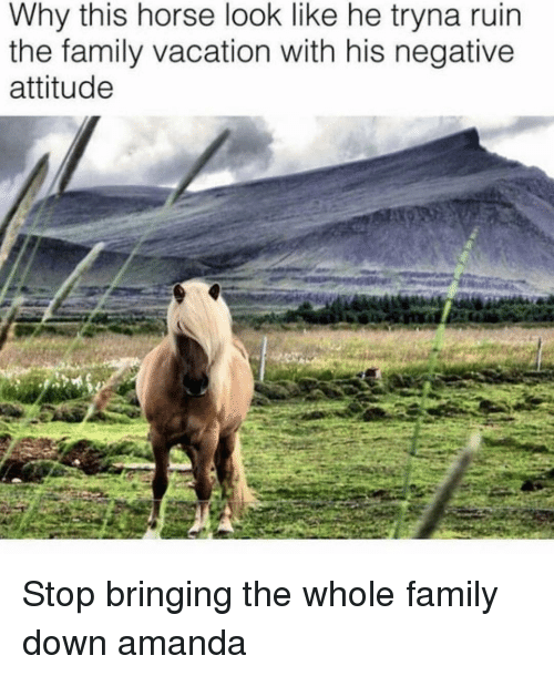 Family, Horse, and Vacation: Why this horse look like he tryna ruin  the family vacation with his negative  attitude Stop bringing the whole family down amanda