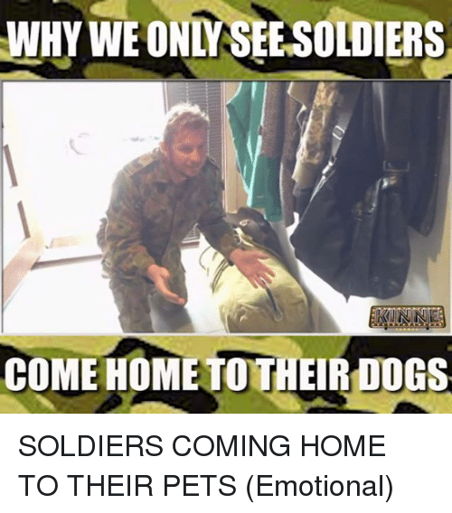 Memes, Soldiers, and Coming Home: WHY WE ONLY SEESOLDIERS  COME HOME TOTH  DO SOLDIERS COMING HOME TO THEIR PETS (Emotional)