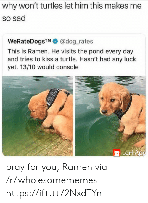 Pond: why won't turtles let him this makes me  so sad  WeRateDogsTM@dog_rates  This is Ramen. He visits the pond every day  and tries to kiss a turtle. Hasn't had any luck  yet. 13/10 would console  Lart App pray for you, Ramen via /r/wholesomememes https://ift.tt/2NxdTYn