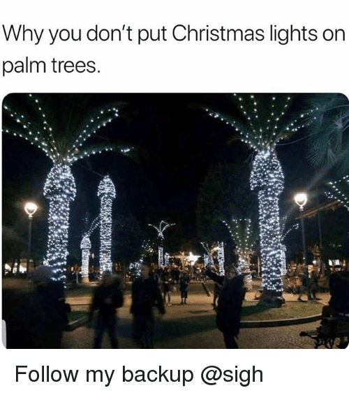 Christmas, Trees, and Trendy: Why you don't put Christmas lights on  palm trees. Follow my backup @sigh