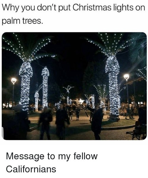Christmas, Funny, and Trees: Why you don't put Christmas lights on  palm trees. Message to my fellow Californians