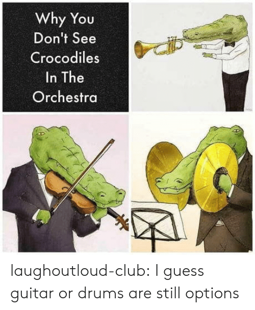 drums: Why You  Don't See  Crocodiles  In The  Orchestra laughoutloud-club:  I guess guitar or drums are still options