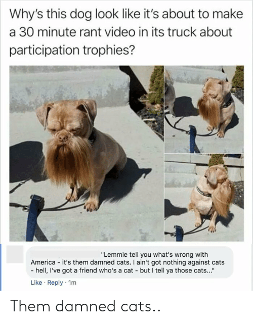 """damned: Why's this dog look like it's about to make  a 30 minute rant video in its truck about  participation trophies?  """"Lemmie tell you what's wrong with  America - it's them damned cats. I ain't got nothing against cats  - hell, I've got a friend who's a cat - but I tell ya those cats...""""  Like · Reply · 1m Them damned cats.."""