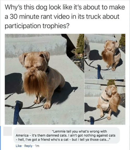 """damned: Why's this dog look like it's about to make  a 30 minute rant video in its truck about  participation trophies?  """"Lemmie tell you what's wrong with  America - it's them damned cats. I ain't got nothing against cats  - hell, I've got a friend who's a cat - but I tell ya those cats...""""  Like · Reply · 1m"""