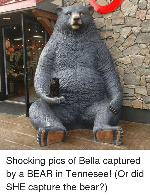 Memes, Bear, and 🤖: wi Shocking pics of Bella captured by a BEAR in Tennesee!  (Or did SHE capture the bear?)