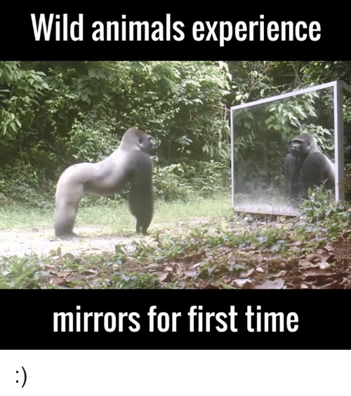 memes: Wild animals experience  mirrors for first time :)