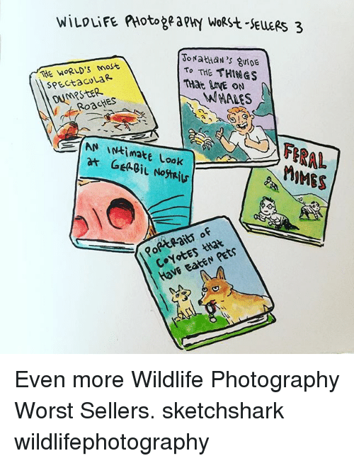 Memes, Pets, and Photography: WILDLiFE PHotogea PHY WoRH-SELLERS 3  THE WORLD'S most  ToNathan's 8vf0E  SPECta Cv La R  To THE THINGS  DUMPSTER  THat grYE ON  / 수. RoacHES  WHALES  /AN \N七imate Look  at GeaSit No  FERAL  ERAL  M9MES  IMES  PoRtPaits of  Coyotes that  Have eatEN Pets Even more Wildlife Photography Worst Sellers. sketchshark wildlifephotography