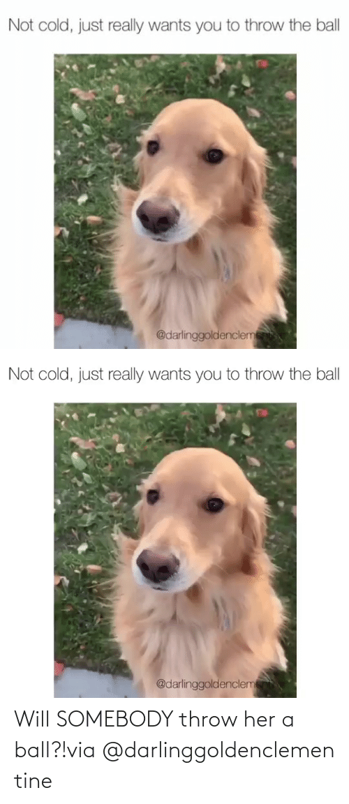 ball: Will SOMEBODY throw her a ball?!via @darlinggoldenclementine