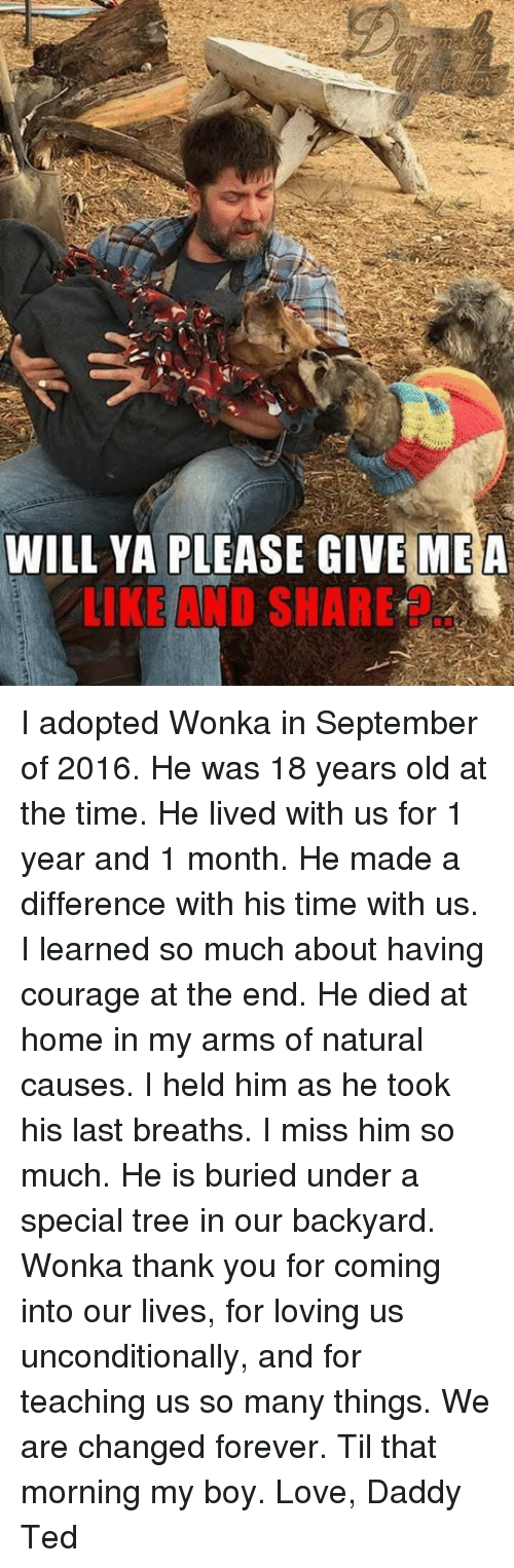 Love, Memes, and Ted: WILL YA PLEASE GIVE ME A  LIKE AND SHARE I adopted Wonka in September of 2016. He was 18 years old at the time. He lived with us for 1 year and 1 month. He made a difference with his time with us. I learned so much about having courage at the end. He died at home in my arms of natural causes. I held him as he took his last breaths. I miss him so much. He is buried under a special tree in our backyard. Wonka thank you for coming into our lives, for loving us unconditionally, and for teaching us so many things. We are changed forever. Til that morning my boy. Love, Daddy Ted