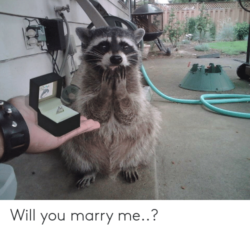 marry me: Will you marry me..?