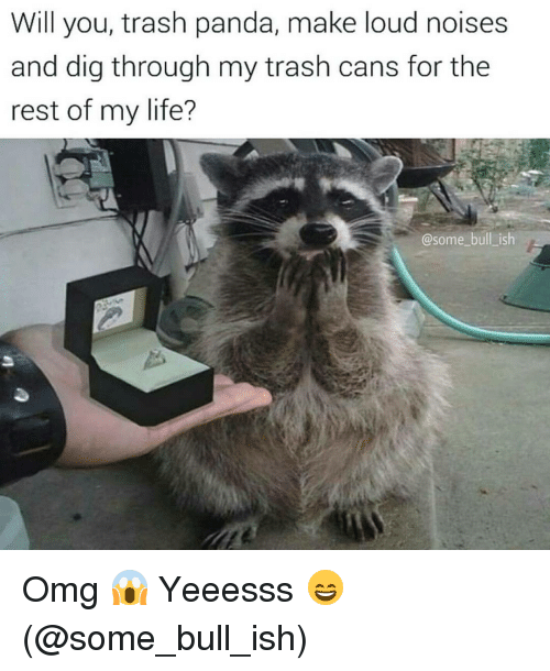 Memes, 🤖, and Dig: Will you, trash panda, make loud noises  and dig through my trash cans for the  rest of my life?  @some bull is Omg 😱 Yeeesss 😄 (@some_bull_ish)