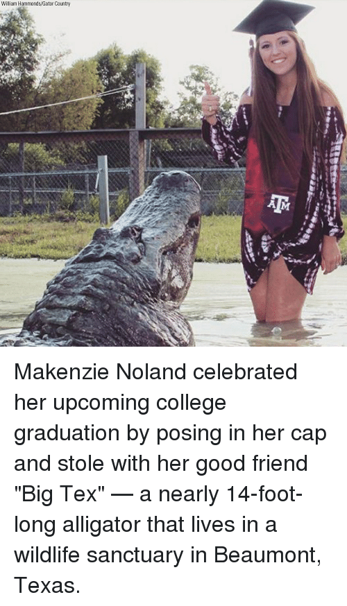 "College, Memes, and Alligator: William Hammonds/Gator Country Makenzie Noland celebrated her upcoming college graduation by posing in her cap and stole with her good friend ""Big Tex"" — a nearly 14-foot-long alligator that lives in a wildlife sanctuary in Beaumont, Texas."