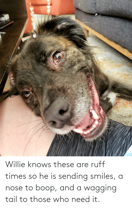 willie: Willie knows these are ruff times so he is sending smiles, a nose to boop, and a wagging tail to those who need it.
