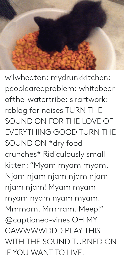 "crunches: wilwheaton: mydrunkkitchen:  peopleareaproblem:  whitebear-ofthe-watertribe:  sirartwork:  reblog for noises  TURN THE SOUND ON FOR THE LOVE OF EVERYTHING GOOD TURN THE SOUND ON   *dry food crunches* Ridiculously small kitten: ""Myam myam myam. Njam njam njam njam njam njam njam! Myam myam myam nyam nyam myam. Mmmam. Mrrrrram. Meep!"" @captioned-vines   OH MY GAWWWWDDD  PLAY THIS WITH THE SOUND TURNED ON IF YOU WANT TO LIVE."