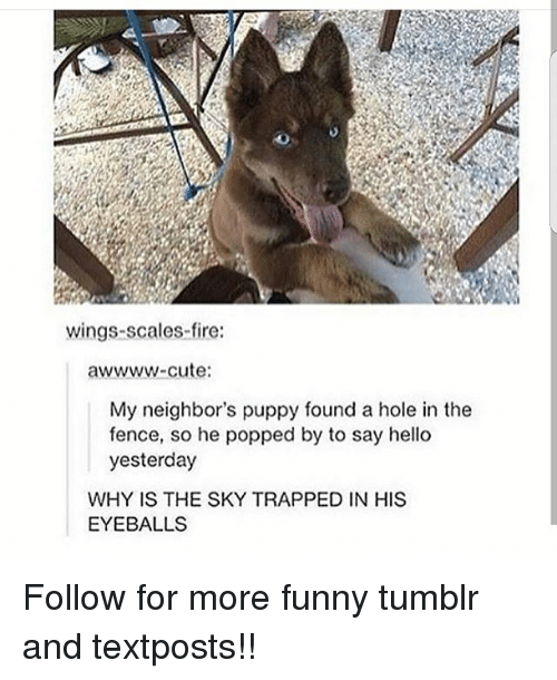 Cute, Fire, and Funny: wings-scales-fire:  awwww-cute  My neighbor's puppy found a hole in the  fence, so he popped by to say hello  yesterday  WHY IS THE SKY TRAPPED IN HIS  EYEBALLS Follow for more funny tumblr and textposts!!