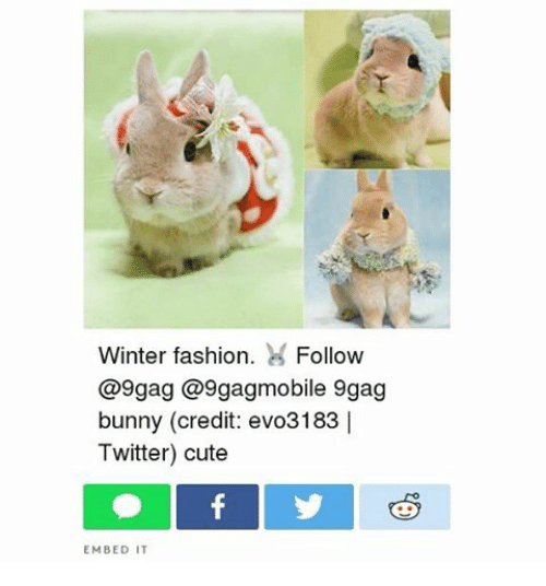 Indonesian (Language), Bunny, and Embed: Winter fashion  H Follow  @9 gag @9gagmobile 9gag  bunny (credit: evo3183 I  Twitter) cute  EMBED IT