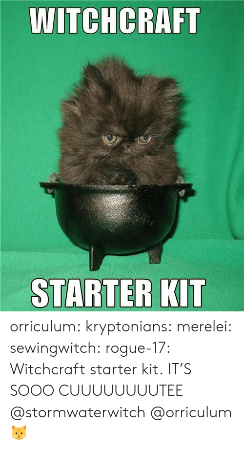 Rogue: WITCHCRAFT  STARTER KIT orriculum:  kryptonians:  merelei: sewingwitch:  rogue-17:  Witchcraft starter kit.  IT'S SOOO CUUUUUUUUTEE  @stormwaterwitch   @orriculum   🐱