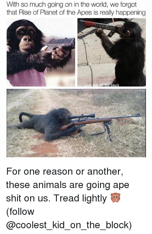 Animals, Memes, and Shit: With so much going on in the world, we forgot  that Rise of Planet of the Apes is really happening  acoolest kid ueblock For one reason or another, these animals are going ape shit on us. Tread lightly 🙊 (follow @coolest_kid_on_the_block)