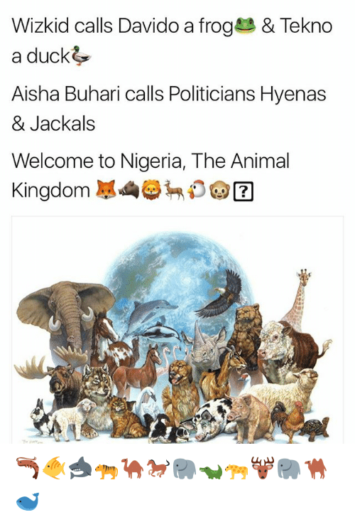 aisha: Wizkid calls Davido a frog & Tekno  a duck  Aisha Buhari calls Politicians Hyenas  & Jackals  Welcome to Nigeria, The Animal  Kingdom D由团  2 🦐🐠🦈🐅🐪🐎🐘🐊🐆🦌🐘🐫🐋