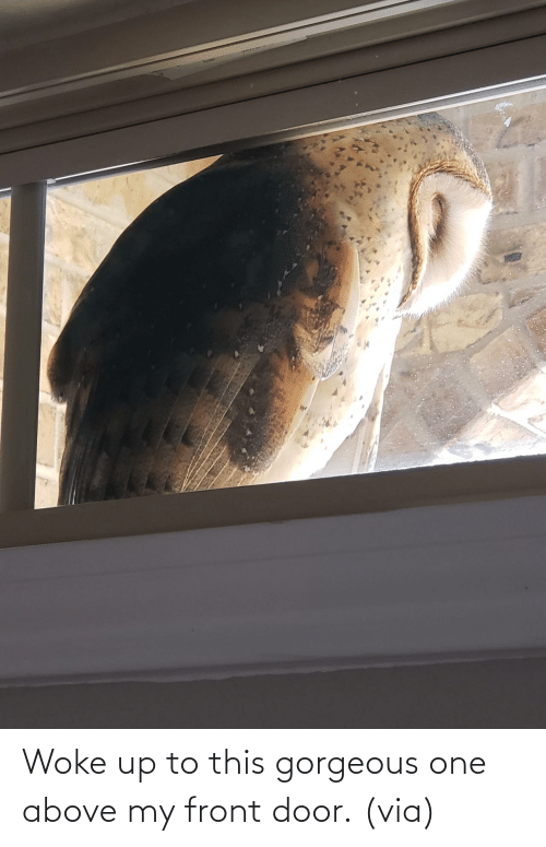 Front: Woke up to this gorgeous one above my front door. (via)