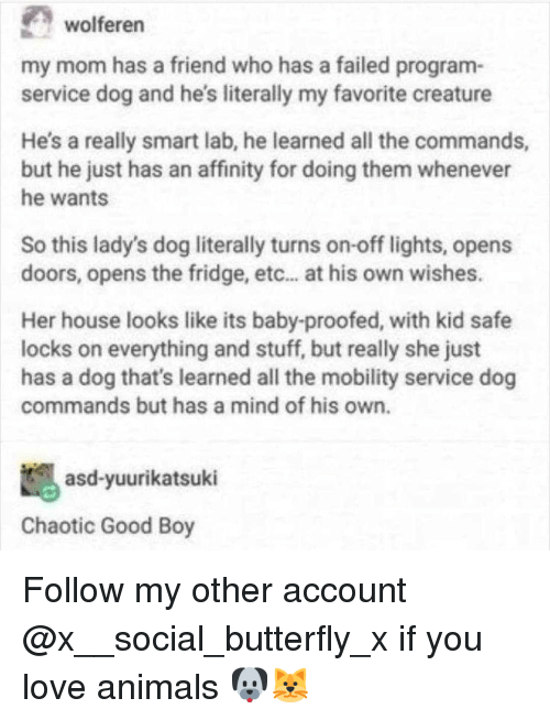 Chaotic Good: wolferern  my mom has a friend who has a failed program-  service dog and he's literally my favorite creature  He's a really smart lab, he learned all the commands,  but he just has an affinity for doing them whenever  he wants  So this lady's dog literally turns on-off lights, opens  doors, opens the fridge, etc... at his own wishes.  Her house looks like its baby-proofed, with kid safe  locks on everything and stuff, but really she just  has a dog that's learned all the mobility service dog  commands but has a mind of his own.  asd-yuurikatsuki  Chaotic Good Boy Follow my other account @x__social_butterfly_x if you love animals 🐶🐱