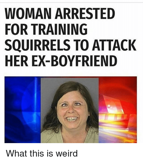 Funny Meme For Ex : Funny squirrels memes of on sizzle squigga