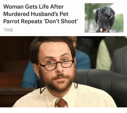Life, Memes, and Time: Woman Gets Life After  Murdered Husband's Pet  Parrot Repeats 'Don't Shoot'  TIME