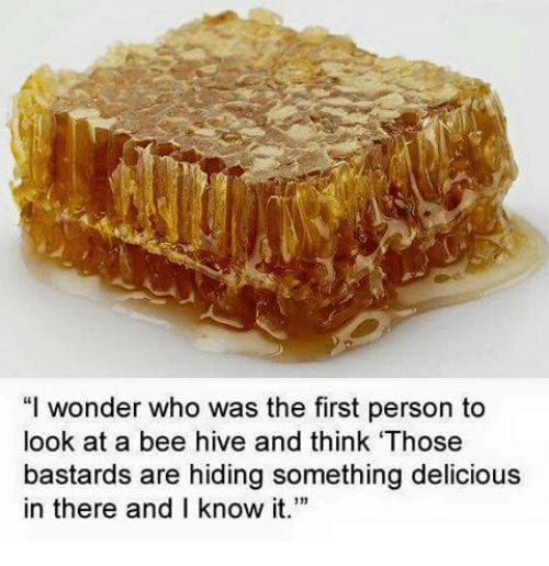Memes, Wonder, and 🤖: wonder who was the first person to  look at a bee hive and think 'Those  bastards are hiding something delicious  in there and I know it.""