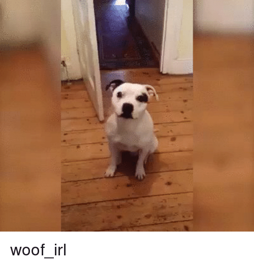 Irl, Dog IRL, and Boy: woof_irl