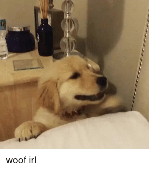 Come Cuddle: woof irl