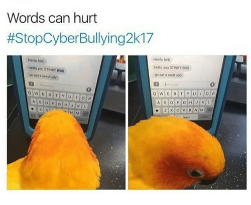 Bir: Words can hurt  #StopCyberBullying2k17  Henlo birb  hello you STINKY BIR  go eat a seed ugly  Henlo birb  hello you STINKY BIRB  go eat a seed ugly  0