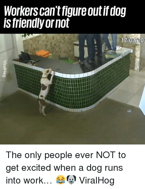 Dank, Work, and 🤖: Workers can't figure outif dog  ls friendly ornot  17/07/20 The only people ever NOT to get excited when a dog runs into work… 😂🐶  ViralHog