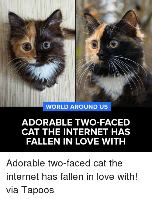 Two-Face: WORLD AROUND US  ADORABLE TWO-FACED  CAT THE INTERNET HAS  FALLEN IN LOVE WITH Adorable two-faced cat the internet has fallen in love with!  via Tapoos