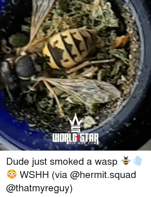 Dude, Memes, and Squad: WORLD GTAR  HIP HOP COM Dude just smoked a wasp 🐝💨😳 WSHH (via @hermit.squad @thatmyreguy)