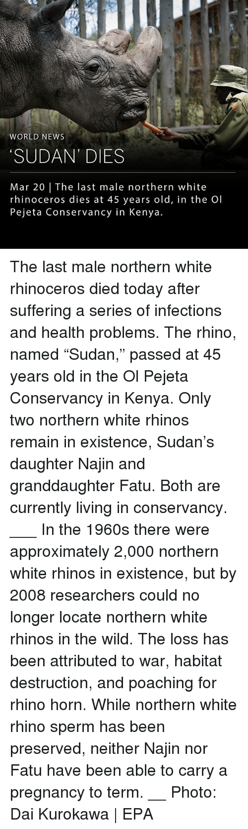 "Memes, News, and Pregnancy: WORLD NEWS  SUDAN' DIES  Mar 20 | The last male northern white  rhinoceros dies at 45 years old, in the Ol  Pejeta Conservancy in Kenya. The last male northern white rhinoceros died today after suffering a series of infections and health problems. The rhino, named ""Sudan,"" passed at 45 years old in the Ol Pejeta Conservancy in Kenya. Only two northern white rhinos remain in existence, Sudan's daughter Najin and granddaughter Fatu. Both are currently living in conservancy. ___ In the 1960s there were approximately 2,000 northern white rhinos in existence, but by 2008 researchers could no longer locate northern white rhinos in the wild. The loss has been attributed to war, habitat destruction, and poaching for rhino horn. While northern white rhino sperm has been preserved, neither Najin nor Fatu have been able to carry a pregnancy to term. __ Photo: Dai Kurokawa 