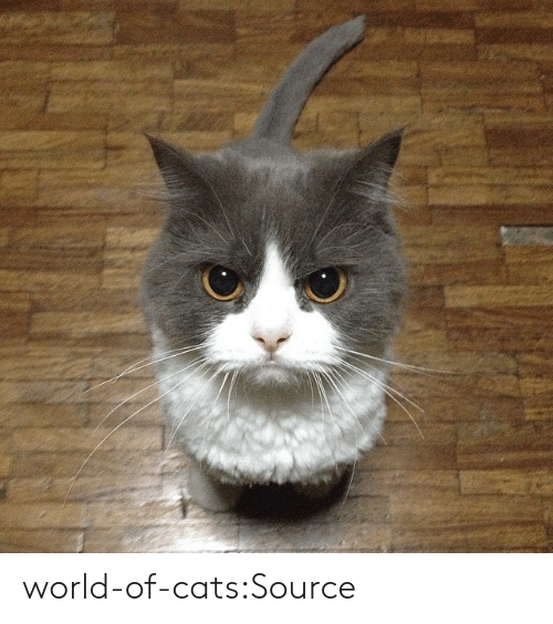 World Of: world-of-cats:Source