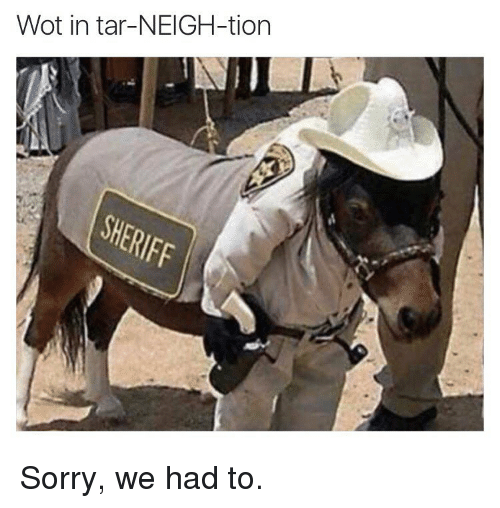 Memes, 🤖, and Wot: Wot in tar-NEIGH-tion Sorry, we had to.